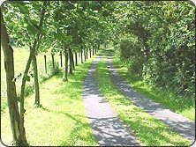The beautiful tree-lined drive at Cil-Coed Uchaf.